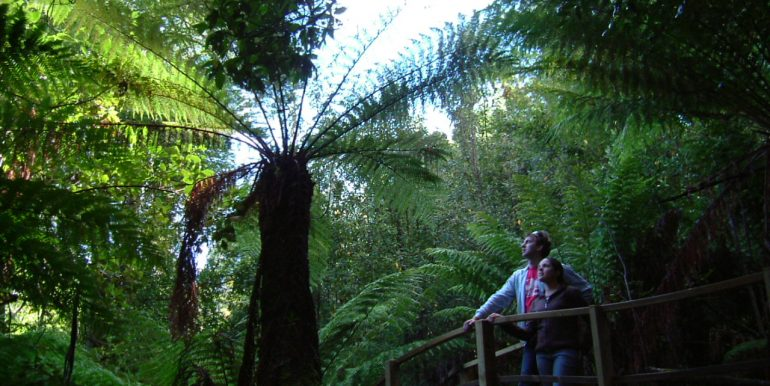 Tree Fern Bridge 2